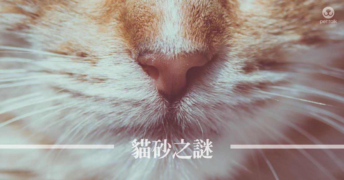 貓砂怎麼選|PetTalk愛寵健康談