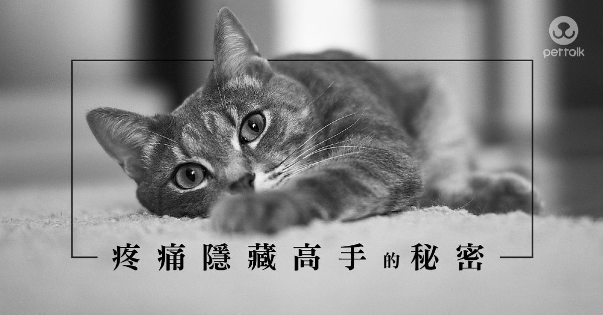 貓咪常見骨關節疾病|PetTalk愛寵健康談