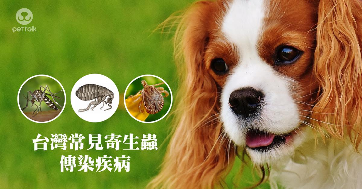 台灣常見寄生蟲傳染疾病|PetTalk愛寵健康談