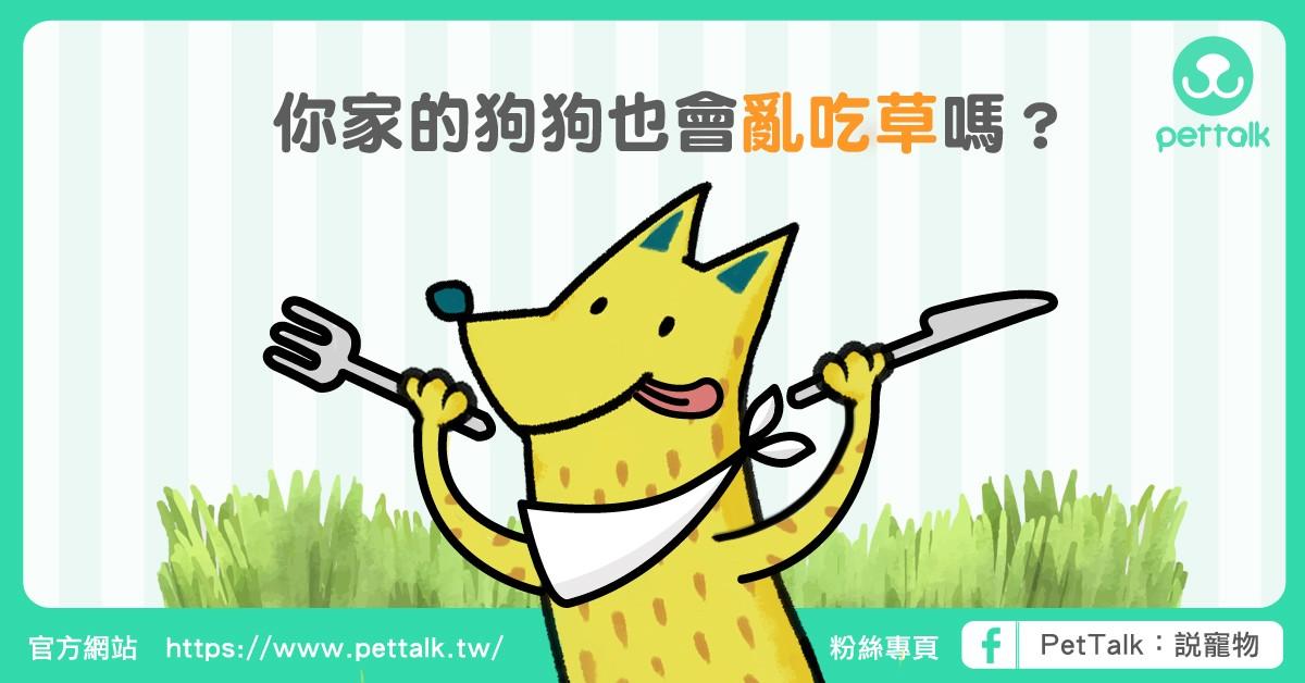 外出遛狗時,你家寶貝會亂吃草嗎?|PetTalk愛寵健康談