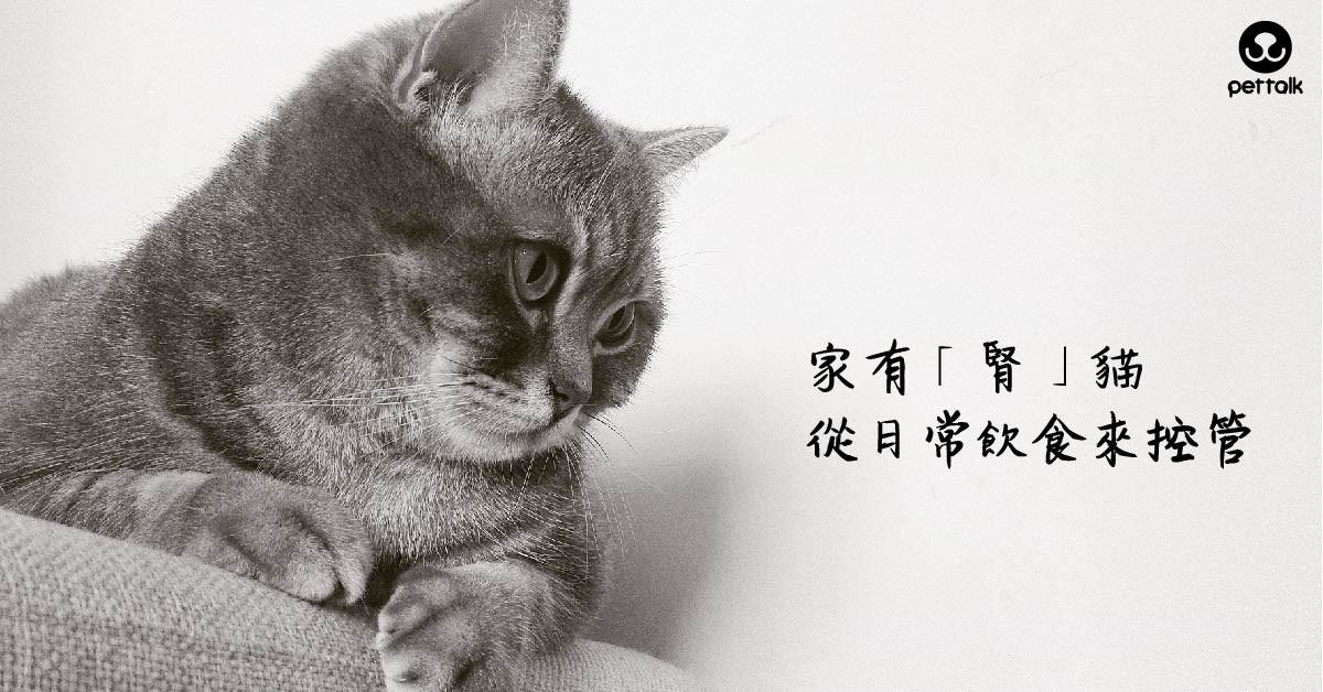 家有「腎」貓,從日常飲食來控管|PetTalk愛寵健康談