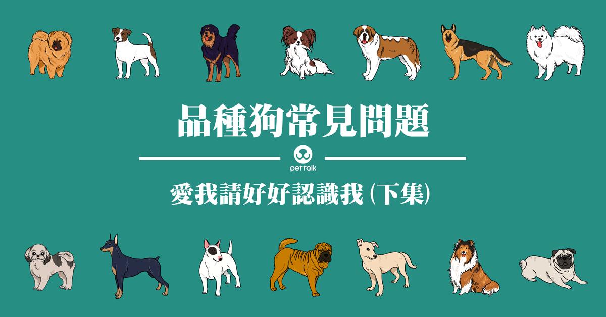 想帶我回家,請先認識我:品種狗常見問題(下)|專業獸醫—楊靜宇