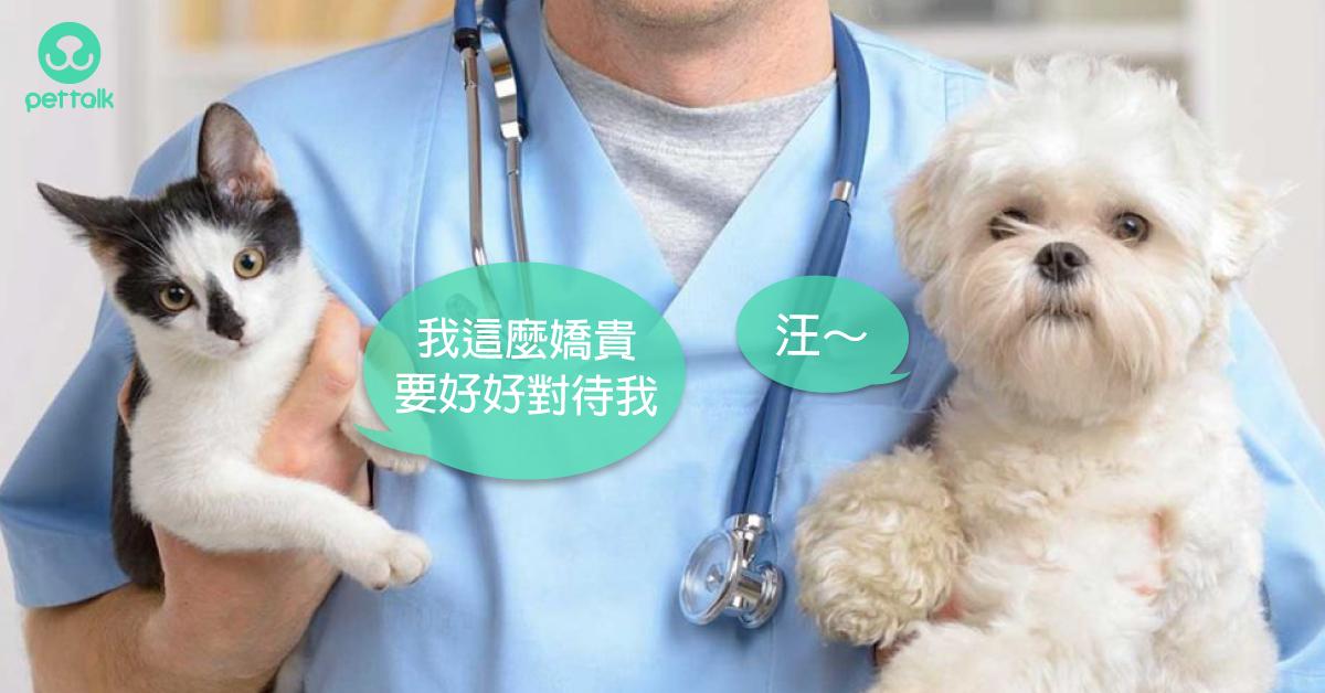 你今年帶寶貝施打狂犬病(拉皮斯病)疫苗了嗎?|專業獸醫—林源盛