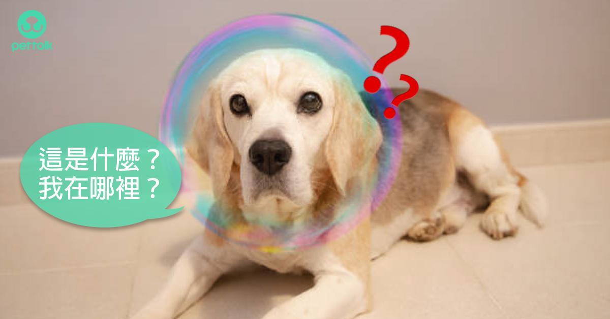 破除迷思系列:狗狗也會老年癡呆?|專業獸醫—吳展祥